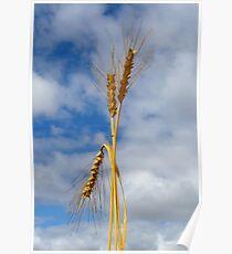 Wheat Stalk Statue Poster