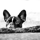 Cant hide with those ears!! by Bec  Brindley