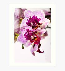 Orchid Duett Art Print