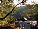 Springbrook N.P.  by Heidi Schwandt Garner