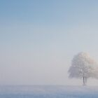 A Solitary Tree in the Snow by Heidi Stewart