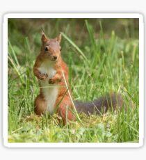 Squirrel in the grass Sticker
