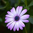 That purple flower by James  Kerr