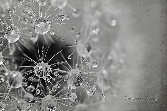 ~ enjoy the little things in life ~ by Lorraine Creagh