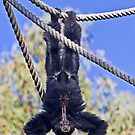 Hanging by miroslava