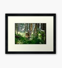 Timberwolf in Forest Framed Print