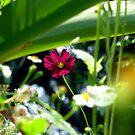 Flower by Digby