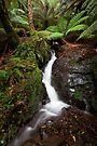 Platts Falls by Travis Easton