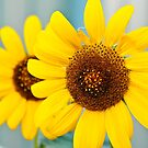 Bright sunflowers by James  Kerr
