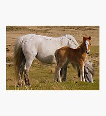 Dartmoor: Mother and Foal Photographic Print