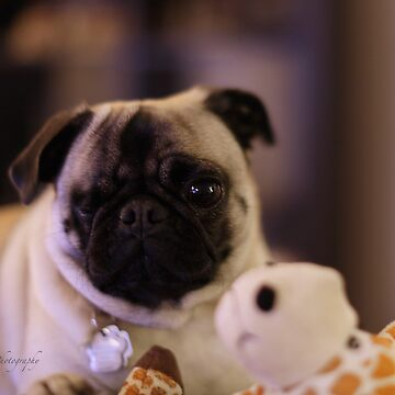 Lilly the Pug and her Girafe by Photograph2u