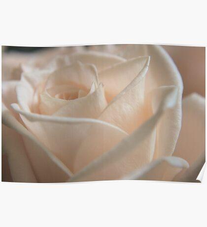 Light Rose Poster