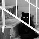 The cat on the stairs by James  Kerr