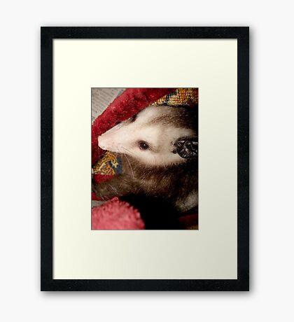 BEANY Framed Print