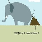 Elephas maximus by rohanchak
