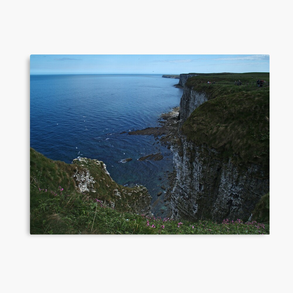 Bempton Cliffs Canvas Print