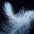 Egret Feathers by Barbara Morrison