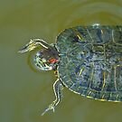 Swimming Turtle by Terry Runion