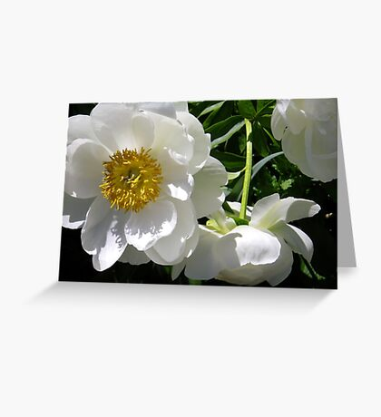 White Peony Cluster Greeting Card