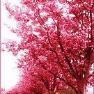 Frühlingsblüten by EvePenman