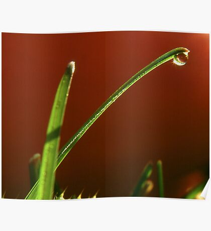 Grass in  front of tomato. Poster