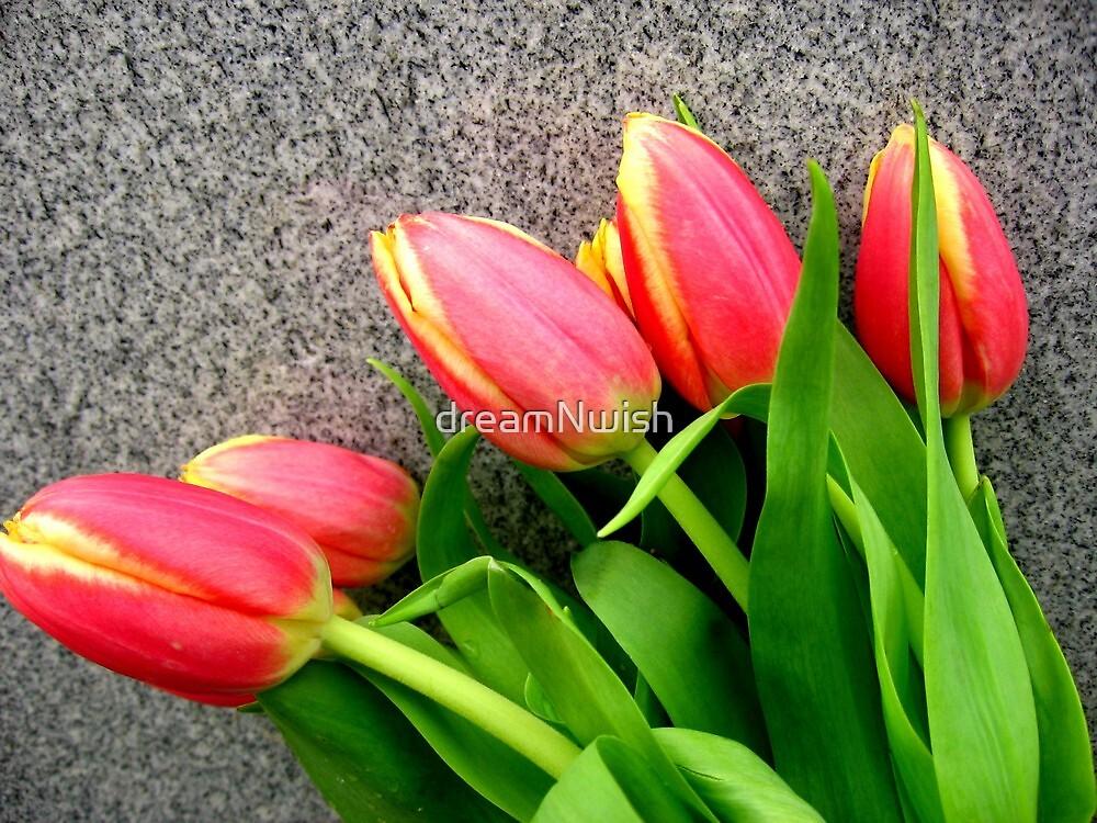 "Pink/Orange Tulips - ""Take a Bow"" by dreamNwish"
