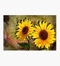 Double Sunshine Photographic Print