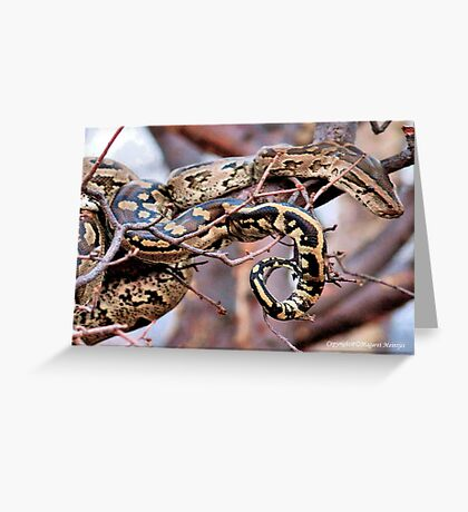 PHYTHON NATALENSIS - The South African python Greeting Card