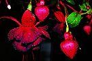 Color Rich Fuchsias by Tori Snow