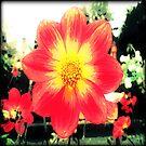 Beautiful Dahlia Garden Flower by EvePenman