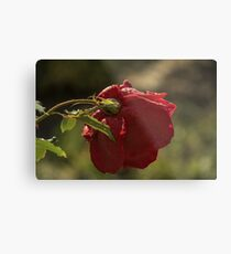 Rose Bokeh 1 Metal Print