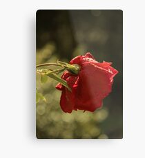 Rose Bokeh 2 Metal Print