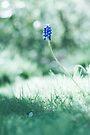 one by Purplecactus