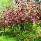 Springtime by Deborah  Benoit