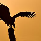Vulture at Dawn - Samburu Kenya by Sue Earnshaw