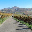 Through the Vineyards by Jay Taylor