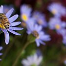 Flower&Bee by Amir Sourial