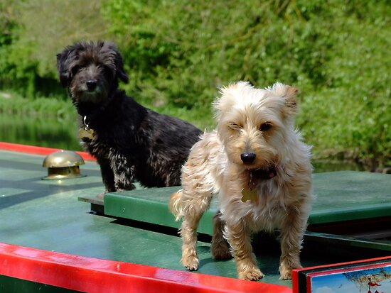 Canal canines by Samantha Higgs