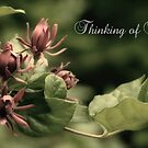 Thinking Of You by JHRphotoART