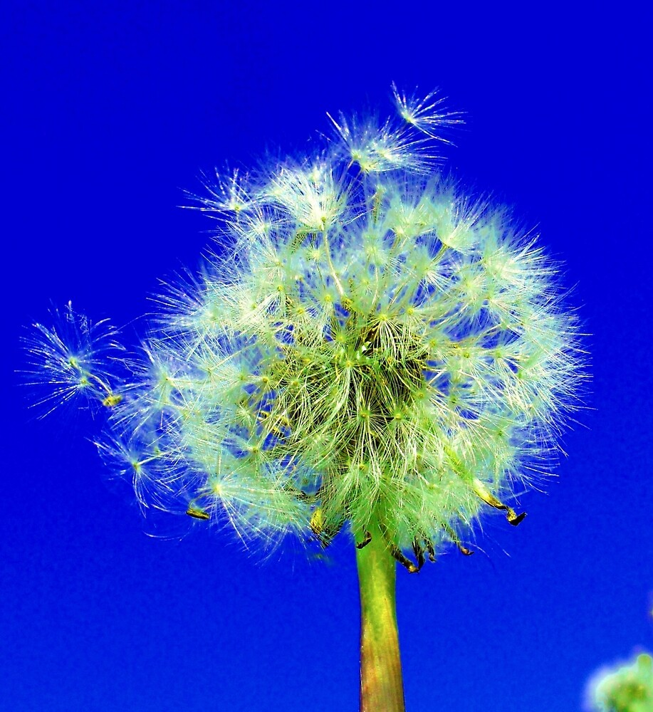 Make a Wish by Rodney Campbell
