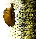 Largemouth Bass  by dvampyrelestat