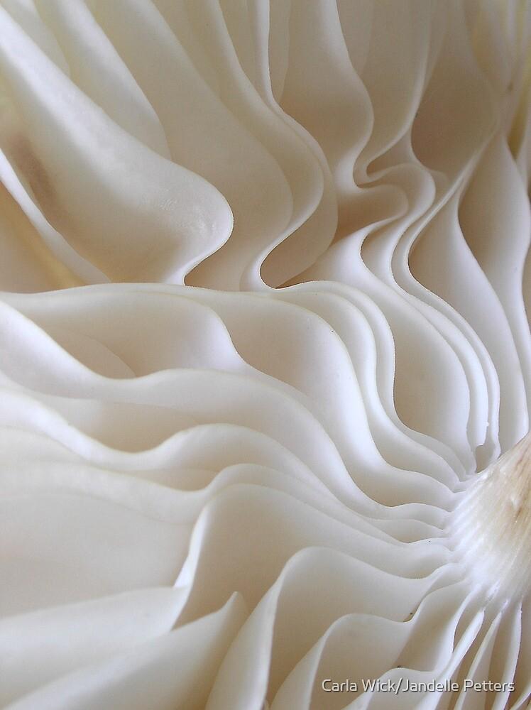 White Ribbons by Carla Wick/Jandelle Petters