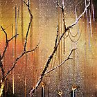 Dripping Gold  by DonnaM