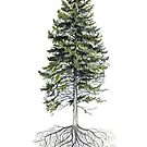 Rooted Pine Tree  by EverhardDesigns