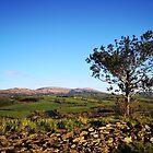 West Cork Tree by Paul Finnegan