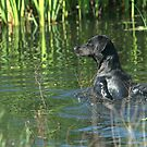 water dog by jude walton