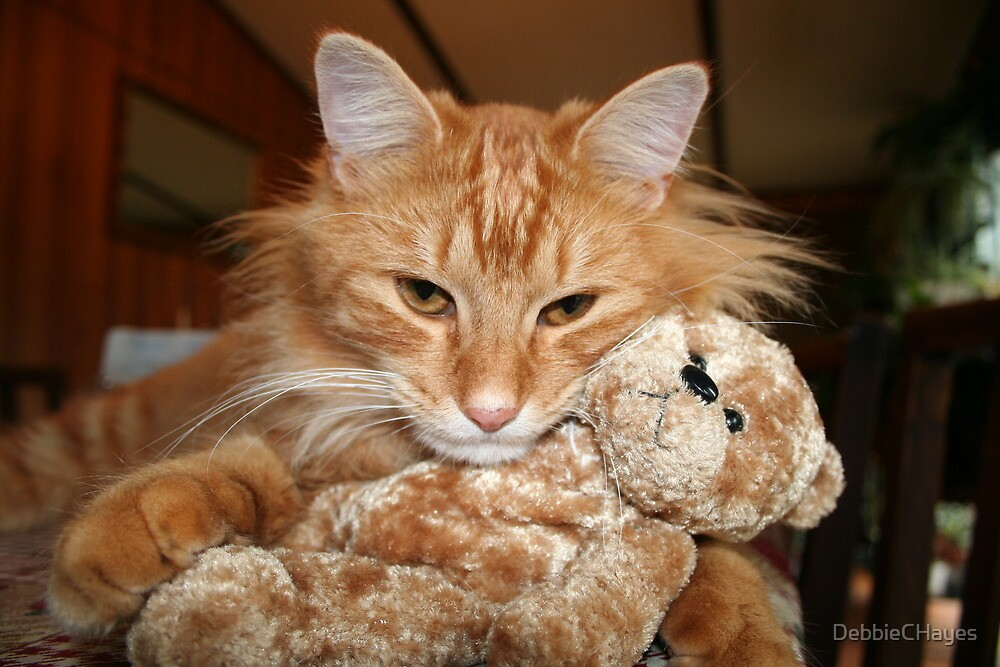 Orange Tabby Cat with His Stuffed Buddy by DebbieCHayes
