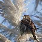 Sparrow by Thea 65