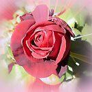 Beauty on a stem   by EdsMum