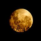 Dance In The Moonlight  by cruisin4susan